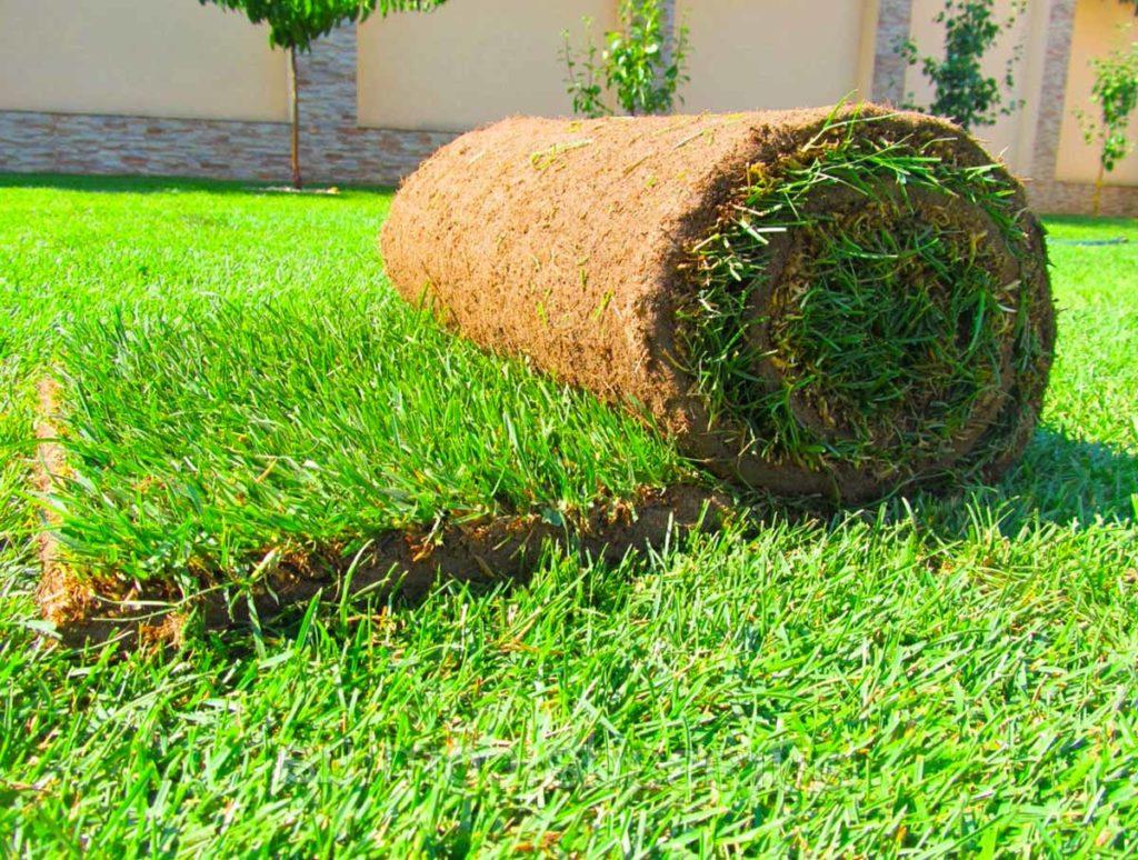 Уход за газоном по сезонам. Уход за рулонным газоном после укладки.